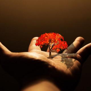 Жизнь - удивительный дар